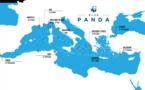 Blue Panda : un voilier pour mettre en lumière la beauté menacée de la Méditerranée