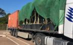 Porto-Vecchio : les oliviers, sains, reprennent la mer