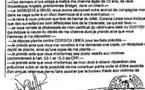 Un chien meurt entre Marseille et Ajaccio : plainte contre Corsica Linea