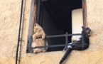 Les insolites de l'été : Les chats prennent la place des pigeons