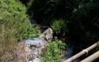 VIDEO - Restauration des cours d'eau de la basse-vallée de la Gravona
