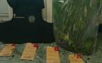 Afa : Il cultivait du... cannabis