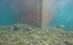 """""""Rhodanus"""" échoué à Cala Longa : sécuriser le site afin de préserver l'environnement marin"""