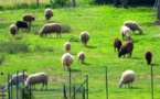 """Conflit agricole :  """"Nous avons bon espoir"""" affirme Via Campagnola"""