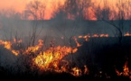 Incendie de la bergerie de François-Pierre Giraschi : La Corse réagit