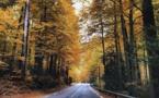 La photo du jour : Vizzavona en automne