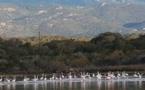 La photo du jour : les flamants roses de Pianottoli