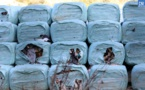 Crise des déchets : les balles s'entassent et les mouches prolifèrent
