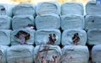 La Corse va transférer ses déchets vers le continent