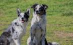 Covid-19 - Pour éviter les abandons et des chiens anxieux à la fin du confinement