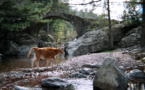La photo du jour : pont génois dans le forêt de Tartagine