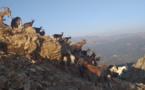 La photo du jour : les chèvres de Punta A Ghjesgia
