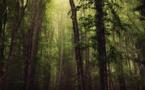 La photo du jour : le sous-bois de Vizzavona
