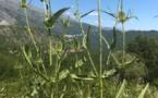La météo du vendredi 10 juillet 2020 en Corse