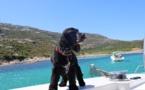 Les insolites de l'été : Cindy, la star du port de Calvi, a le pied marin !