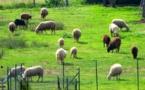 Parcours pastoraux : Les Jeunes agriculteurs de Haute-Corse saluent les engagements pris par Lionel Mortini