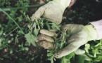 La FDSEA 2B dénonce « des contrôles abusifs » sur des ouvriers de maraîchers agricoles