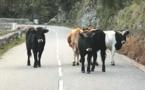 Divagation animale : Des boucles inviolables et des barrières virtuelles pour éviter les accidents sur les routes