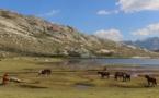 La photo du jour : les chevaux du lac de Ninu