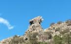 La photo du jour : entre Barchetta et Ponte Novu, un aigle de pierre