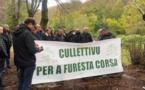 Le Cullettivu per a furesta corsa demande un plan de relance pour la filière bois