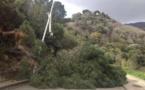 Bastia : un arbre tombe sur la chaussée et coupe la route du Machjò