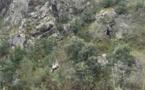 Risque de contamination du captage d'eau : à Asco Dragon 2B héliporte la vache morte