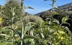 La météo du lundi 26 avril 2021 en Corse