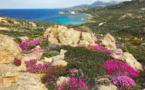 Météo de la semaine en Corse : un temps bien agité pour les Saints de glace