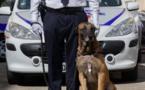 Hobi, le malinois policier a reçu une médaille d'honneur pour sa carrière