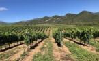 Vins Corses : l'AOC comme gage de qualité