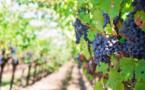Œnotourisme : un séjour bien-être pour découvrir les vignobles de Figari