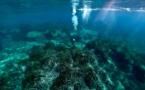L'image du jour : L'herbier de posidonie du Cap Corse