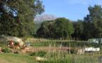 Bastia : Les agriculteurs mécontents se mobilisent face aux retards de paiement de l'État