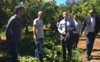 San Giuliano : Visite du sous-préfet de Corte sur le site de l'INRA