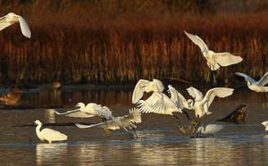 Influenza aviaire : Bastia présente un risque élevé
