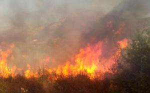2000 m2 de maquis détruits dans  la plaine d'Aregno