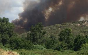 Propriano : Gros départ de feu à Capu Laurosu