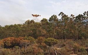 Le feu de l'Argentella maîtrisé : Plus de 4 hectares parcourus par les flammes