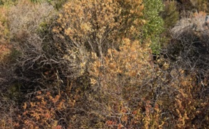 Corse-du-Sud : Calamité agricole pour la sécheresse 2017