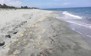 Sur la plage de Linguizzetta ce sont quelques touristes qui s'affairent au ramassage des boulettes de paraffine
