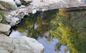 Guy Armanet : « Il faut 360 000 € pour dépolluer la rivière de Botte ! C'est la limite du tout-tourisme ! »
