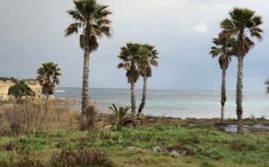 """Les quatorze palmiers du site de """"Mara a Beach"""" devront être déterrés !"""