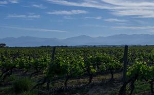 Top 50 de Jeb Dunnuck : les vins «exceptionnels» de la cave d'Alexia primés