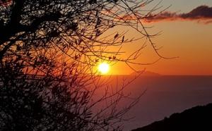La photo du jour : l'olivier de Silgaghja, le Soleil, Monte Cristo