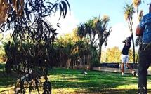 Golf : Le championnat de Corse par équipes au Borgo Golf Club