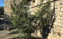 Ghisonaccia : L'arbre de Noël vandalisé à Saint-Antoine