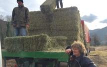 Ponte-Leccia : Après les intempéries, la solidarité agricole s'organise
