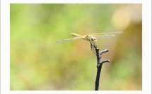 Bastia : Farfalle è Filangrocche di Corsica di a Serra di Pignu