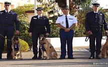 Ajaccio : La médaille de la Défense nationale à trois chiens de la gendarmerie admis à la retraite